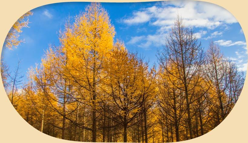 キコリ時計工房(Kicori)は人にも自然にも優しい木製品